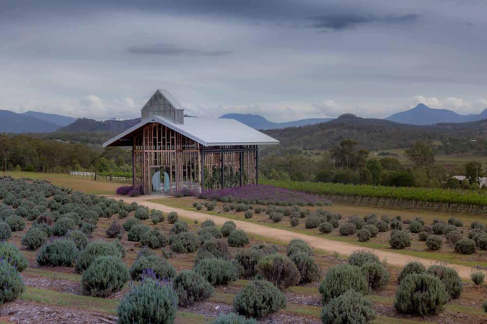Kooroomba Vineyard & Lavender Farm