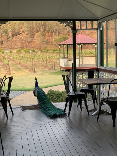 Canungra Valley Vineyards