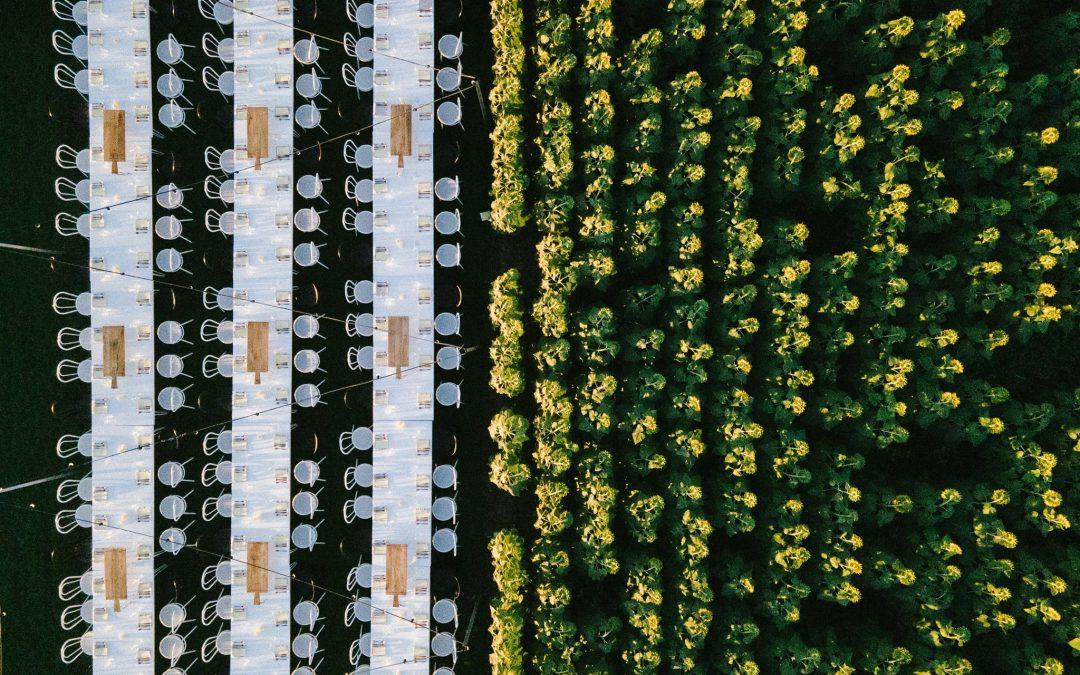 Kalbar Sunflower Festival